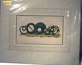 KEARSLEY HAND COLOURED SNAKE COPPER PLATE PRINT 1801